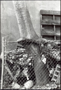Tree + Fence, Out my Back Window, 1998.